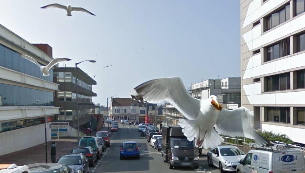 Photobombing seaguls