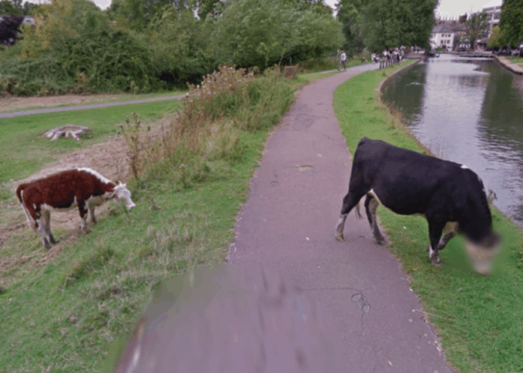 A Blurred Cow's Face on Google Maps